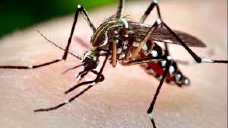 Infecție cu virusul West Nile, CONFIRMATĂ în județul Botoșani! Atenție la simptome!