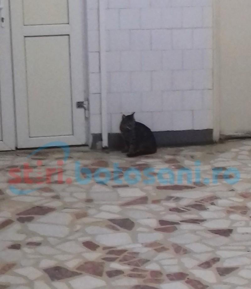 Pisică la plimbare pe holurile unui spital din Botoşani – FOTO