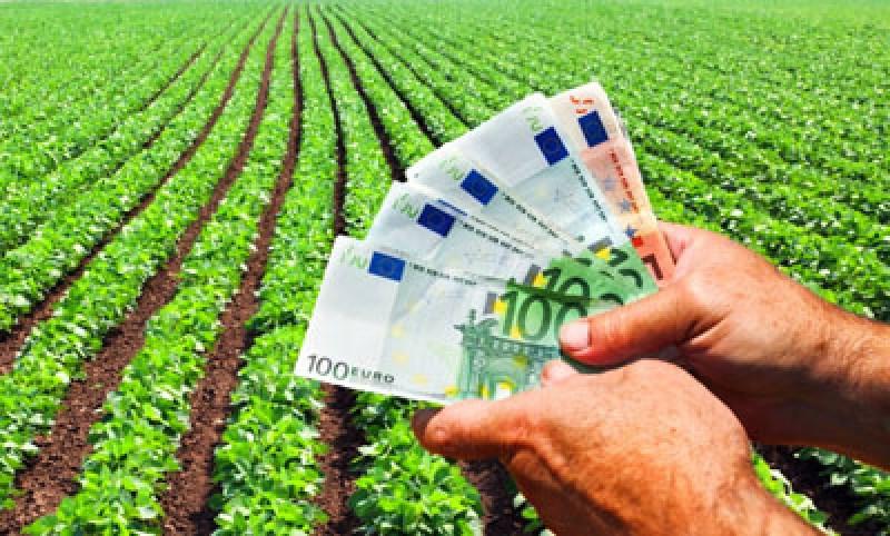 Tinerii din diaspora pot obține de la stat o finanțare de până la 50.000 de euro