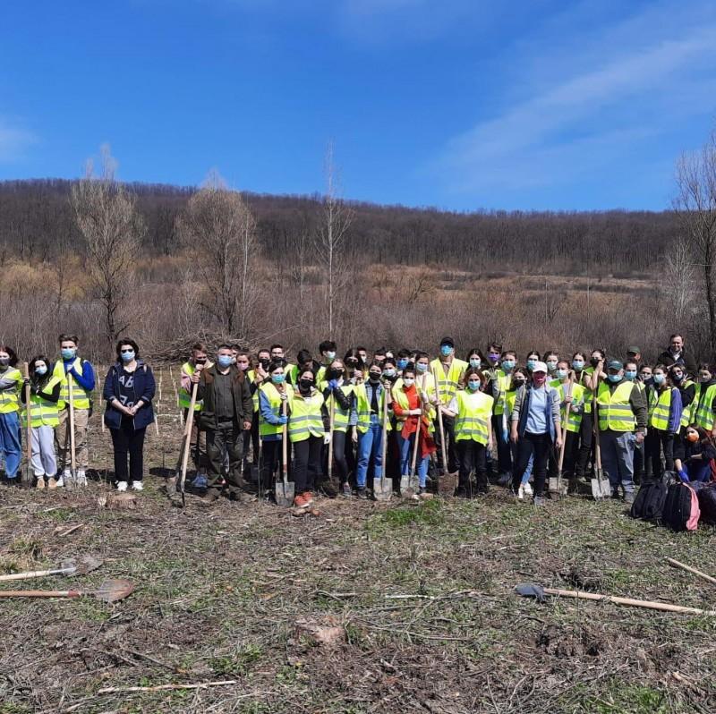 """Voluntarii """"Interact"""" au plantat sute de puieți în zonele Corni și Baisa (FOTO)"""