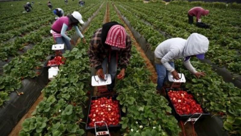 100 locuri de muncă în domeniul agricol în Spania, prin intermediul reţelei EURES