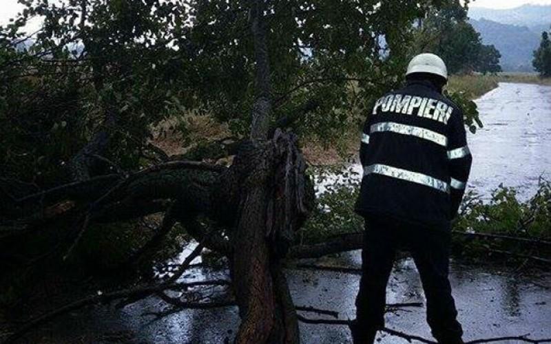 15 apeluri de urgență la Botoșani în urma ploilor de aseară. Un arbore căzut pe DJ 207 N, Orășeni Deal – Cristești a blocat circulația până la sosirea echipajelor ISU