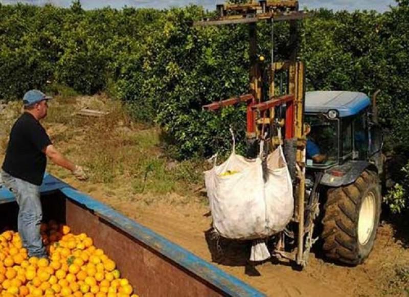 150 locuri de muncă în domeniul agricol în Spania, prin intermediul Reţelei EURES