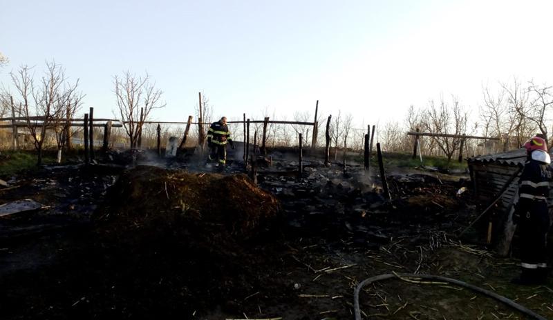 22 de animale au ars într-un incendiu provocat din neglijență la Corlăteni
