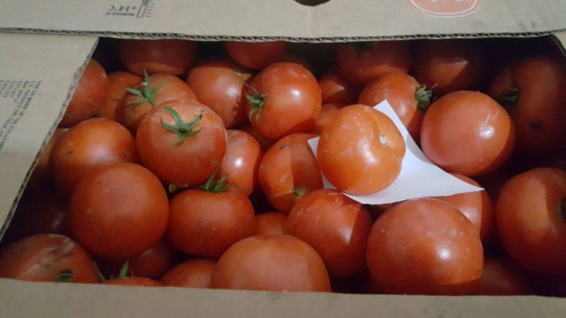 3000 euro pentru cultura de tomate. Programul Tomate 2017, în județul Botoșani