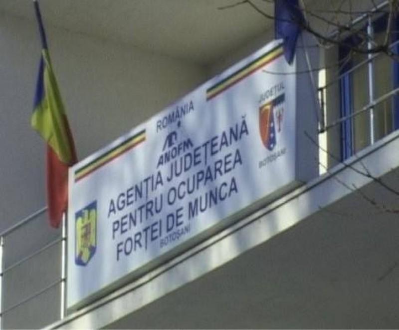 3.525 persoane angajate prin intermediul AJOFM Botoșani