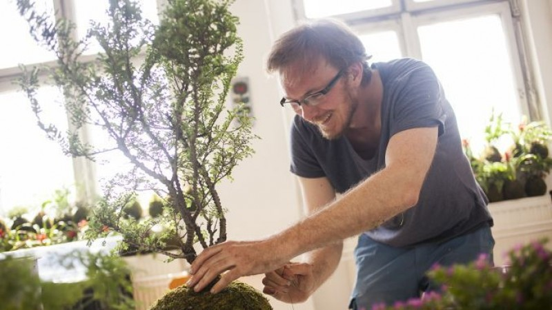 5 sfaturi pentru îngrijirea plantelor la ghiveci
