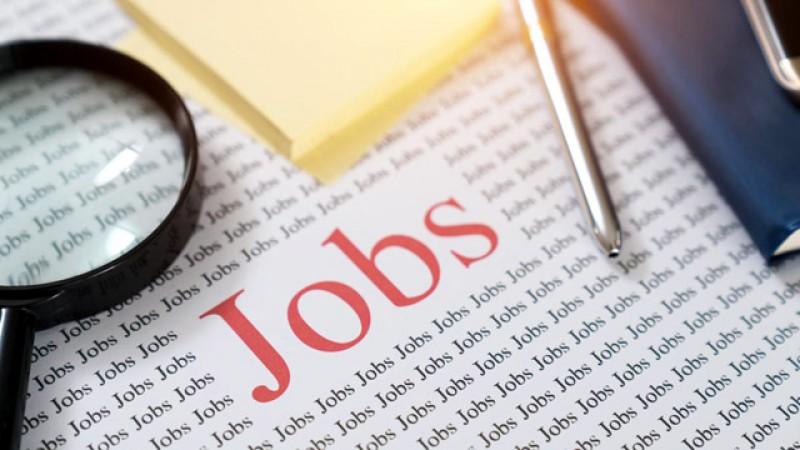 944 de locuri de muncă valabile în această săptămână la AJOFM Botoșani