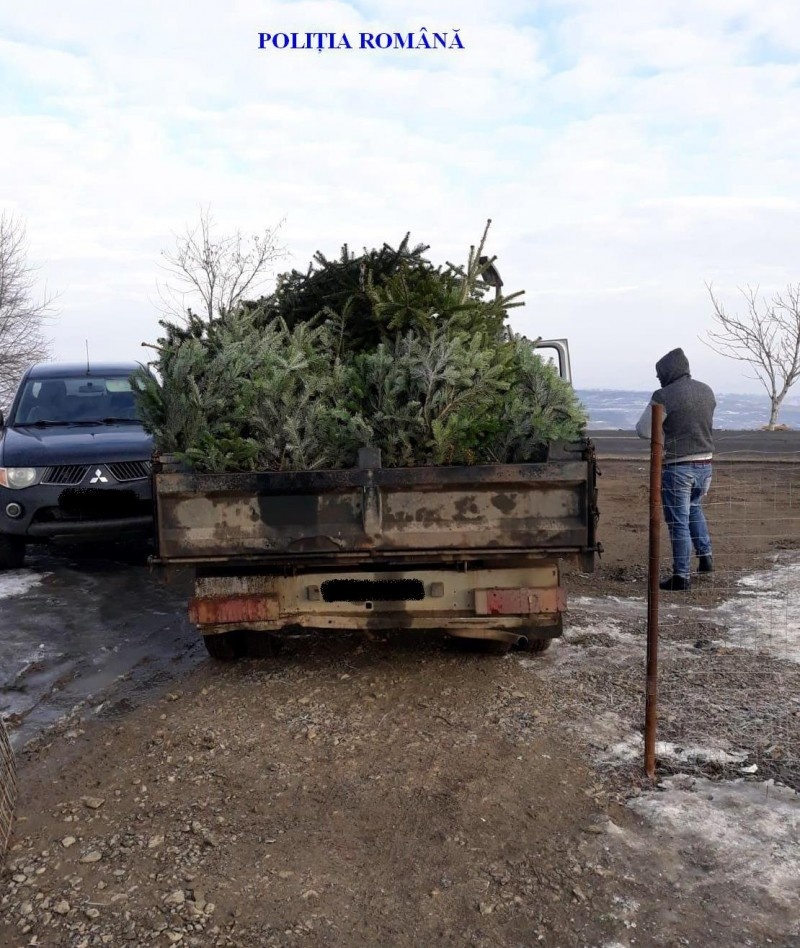 A început sezonul brazilor de Crăciun: Amenzi de mii de lei și marfă confiscată!