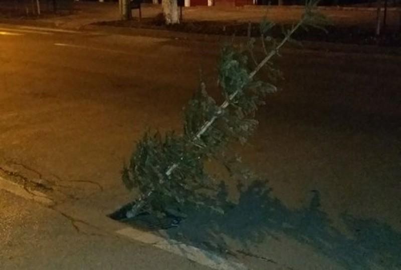 """A """"plantat"""" un brad intr-o groapa de pe Bulevardul Mihai Eminescu! FOTO"""