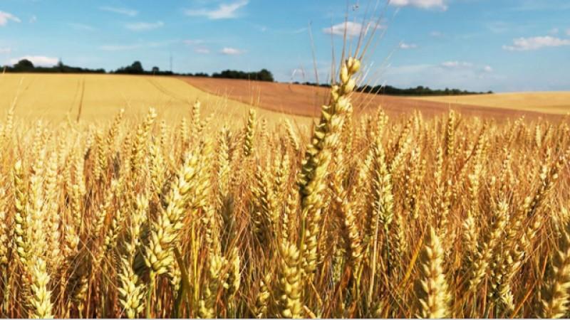 """Adrian Oros, ministrul Agriculturii: """" Trebuie să încurajăm agricultorii români să cumpere terenurile din România. Acolo unde ei nu reușesc, să intervină statul și să cumpere acele terenuri"""""""