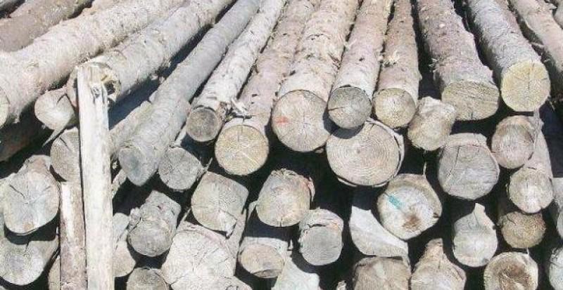 Agent economic sancționat pentru comerț neautorizat cu material lemnos!