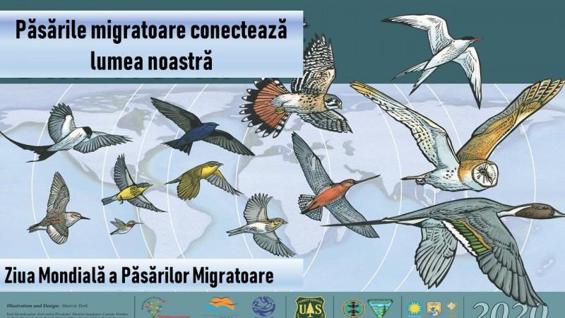 Agenția pentru Protecția Mediului Botoșani sărbătorește Ziua Mondială a Păsărilor Migratoare