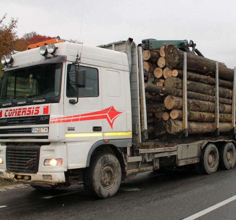 Ai de gând să denunți un transport ilegal de lemne? Vezi ce poți păți dacă nu ai dreptate!