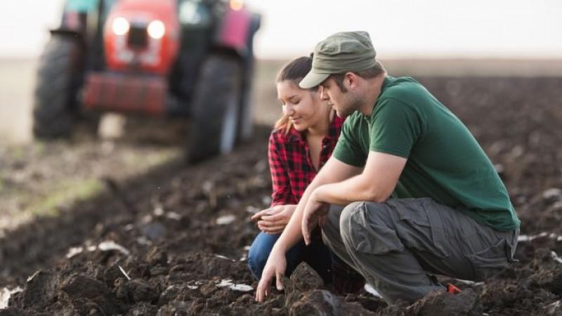 Ai luat sau ai dat teren în arendă? Iată PREȚURILE produselor agricole care se iau în calcul la plată!