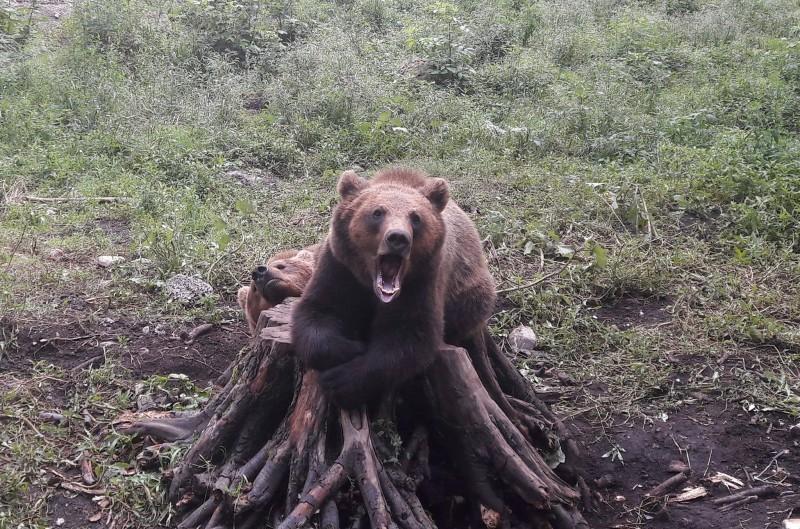 ALERTĂ la Grădina Zoologică din Brașov: Doi îngrijitori sunt în stare gravă după ce au fost atacați de urși