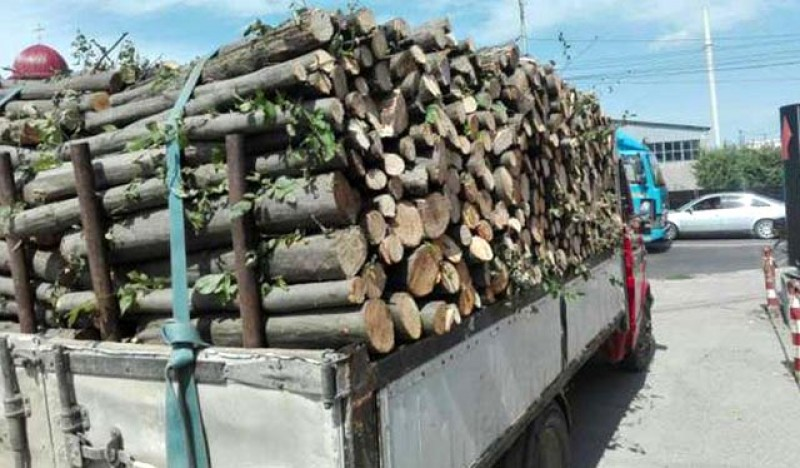 Amendă de 6000 lei și 5,533 metri cubi de material lemnos confiscată de la un tânăr care făcea transport cu acte expirate