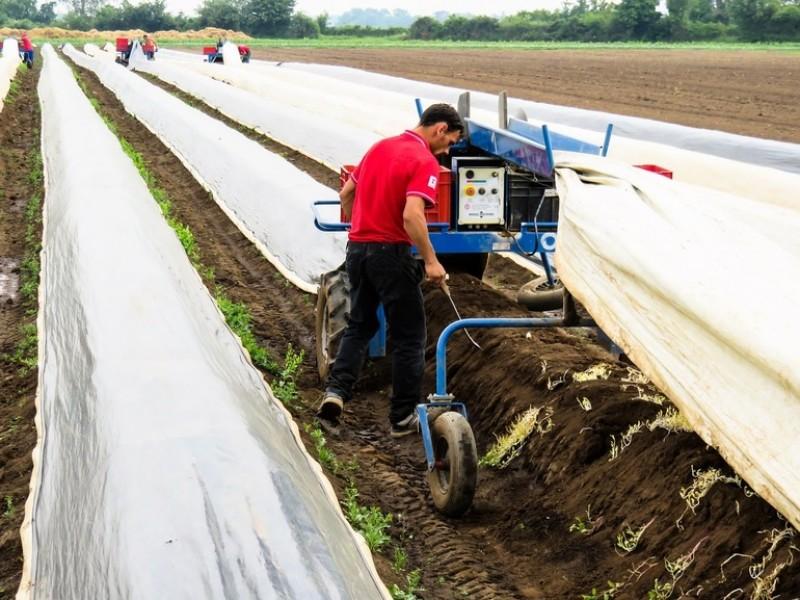 Angajatorii vor fi scutiți, până la 5 ani, de impozit și contribuții pentru tinerii angajați în agricultură sau industria alimentară