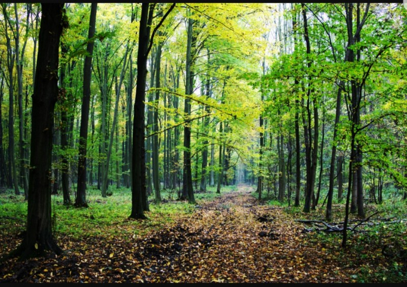 """Anunț: APIA Botoșani primește Cereri de sprijin pentru schema de ajutor de stat """"Servicii de silvomediu, servicii climatice și conservarea pădurilor"""""""