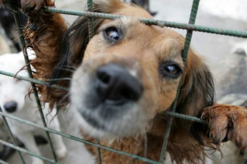 """Apelul asociației pentru protecția animalelor: """"Vă rugăm, acești câini au nevoie de ajutorul și de bunătatea dumneavoastră, nu de ură!"""""""