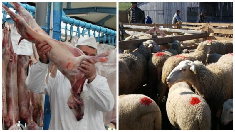 Apelul oierilor către retaileri: Vindeți miei românești, nu carne din afară, aproape expirată!
