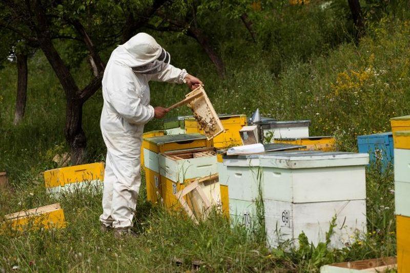 APIA Botoșani: În atenția apicultorilor!