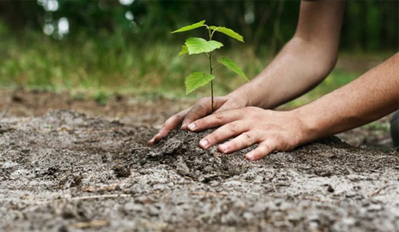 APIA Botoșani a anunțat că în această toamnă alocă 15.000.000 euro pentru împăduriri !
