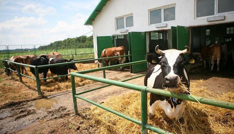 APIA Botoșani a început astăzi plata ajutorului de stat în sectorul creșterii animalelor