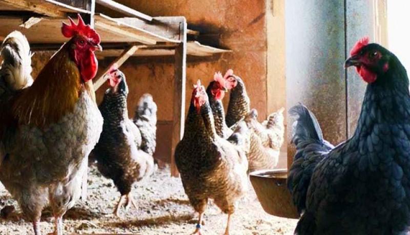 APIA Botoșani primește cereri de solicitare a ajutorului de stat pentru susținerea activității crescătorilor din sectorul avicol în contextul crizei economice generate de pandemia COVID -19