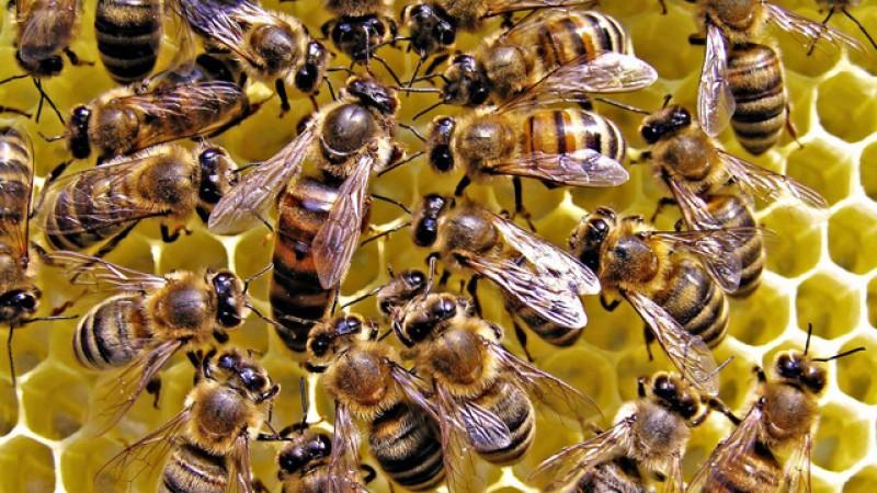 Apicultorii au primit astăzi ajutorul de minimis pentru sectorul apicol 2020