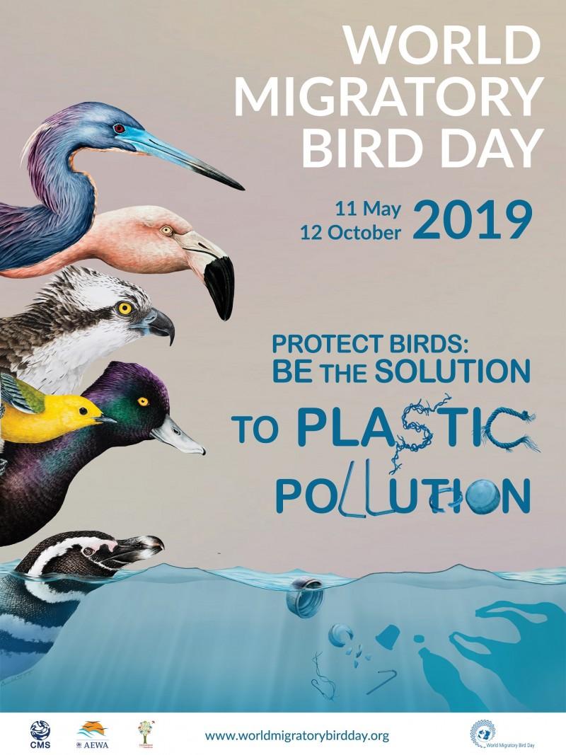 APM Botoșani: Protejează păsările: combate poluarea cu plastic!