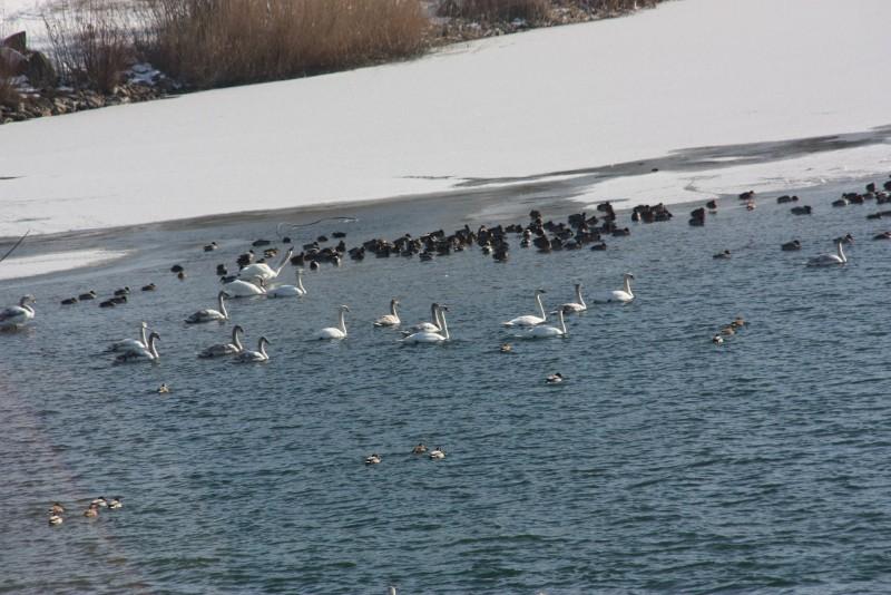 Zone acvatice din Botoșani, monitorizate de autoritățile de mediu