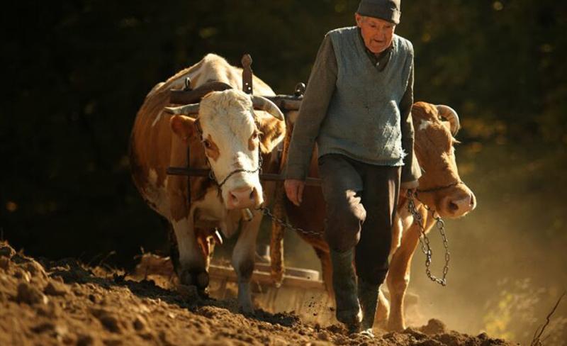 Aproape 9000 de pensionari din agricultură de la Botoșani trăiesc cu o indemnizaţie socială medie de 157 de lei