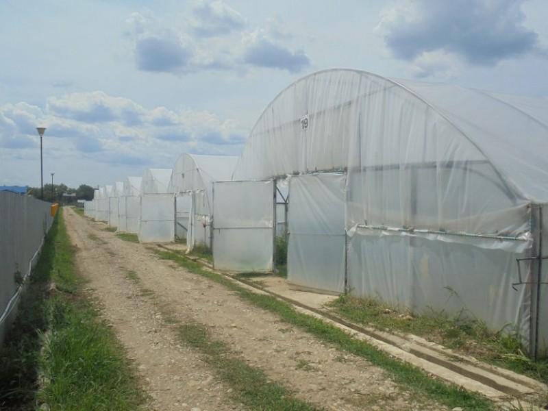 """Aproape jumătate din probele de tomate din cadrul programului """"Tomate românești"""" au conținut reziduuri de pesticide; între timp, a scăzut suprafața cultivată cu legume în sistem ecologic"""
