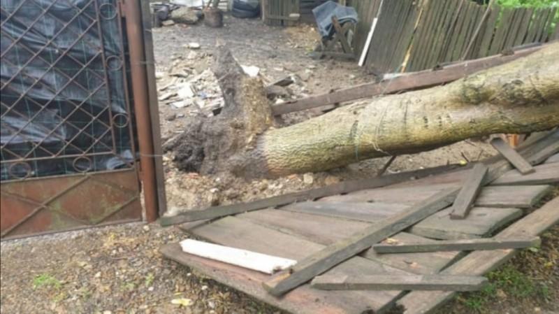 Arbore căzut pe o stradă din Cătămărăști Deal