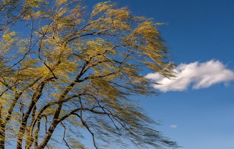Astăzi: Cod galben de vânt în Botoșani