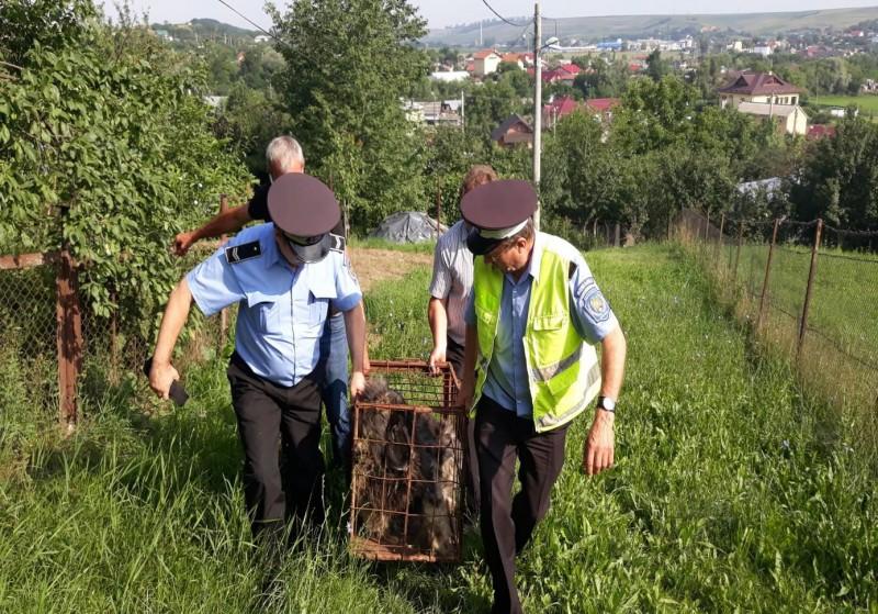 Atenție, câine rău! Cetățeni speriați de un animal agresiv, au cerut ajutorul polițiștilor locali! FOTO