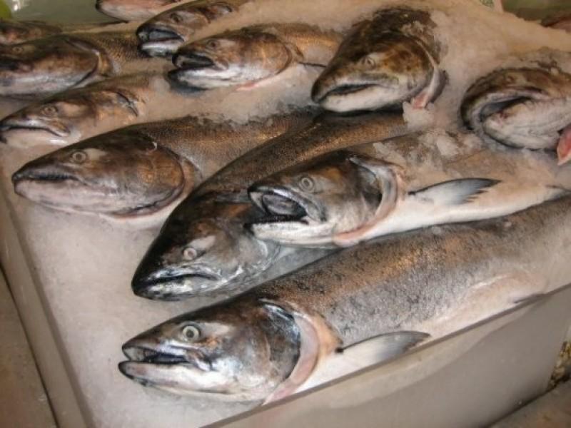 Atenție la ce cumpărați! Nu mai mâncați aceste tipuri de pește. Conțin mercur și plumb