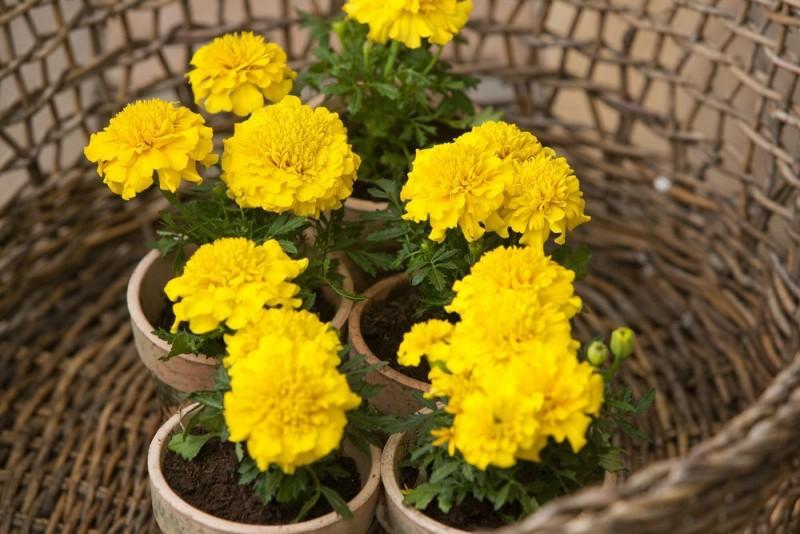 Atenție la mesajele pe care ți le transmit plantele tale!