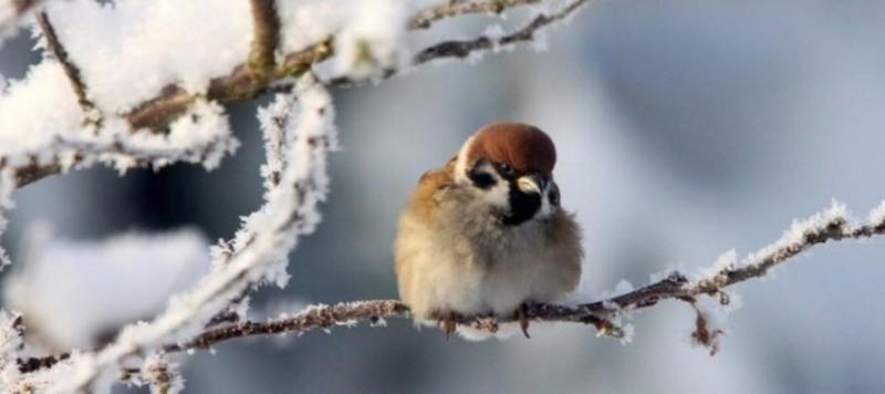 ATENȚIE! Meteorologii anunță vreme deosebit de rece până duminică dimineață!