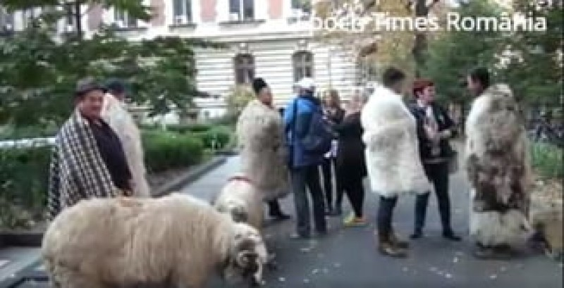 Au fost amendați ciobanii care au protestat la ușa lui Daea!