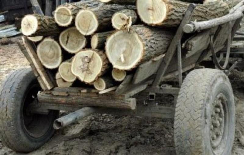 """Au furat lemne, polițiștii i-au """"ars"""" cu un dosar penal!"""