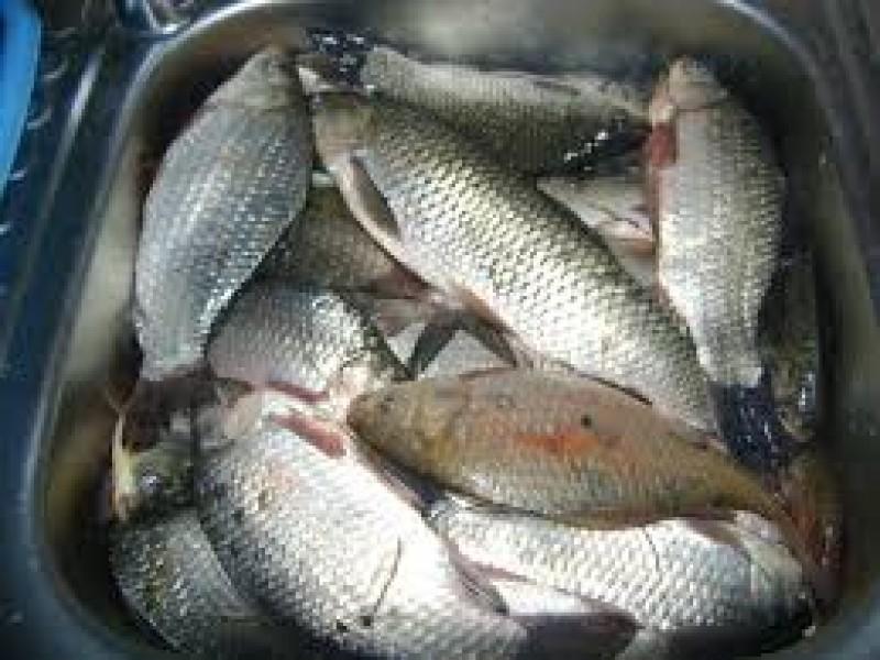 Au furat zeci de kilograme de pește din Iazul Dracșani!