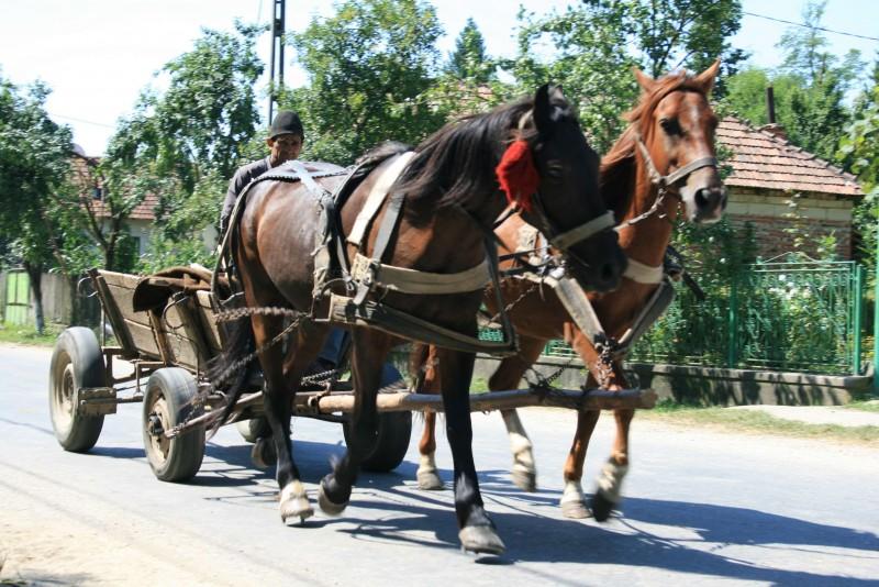 Autoritățile admit că au gafat cu privire la obligația asigurării căruțelor: Cel mai probabil vorbim despre o eroare materiala