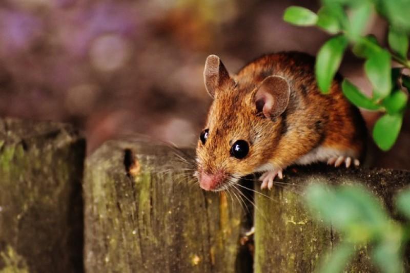 Autorităţile au deschis o anchetă după ce o femeie din Botoşani a găsit un șoarece într-o cutie cu pastă de tomate