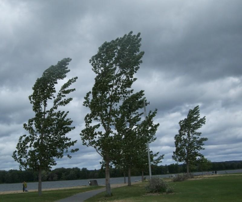 Avertisment meteo: Botoșani intră sub Cod galben de vânt, o zi întreagă