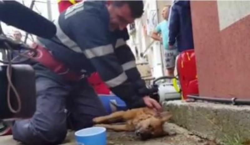 """VIDEO EMOȚIONANT - Cățel scos din flăcări, resuscitat de un pompier! """"Tot respectul meu. Mare om""""!"""""""