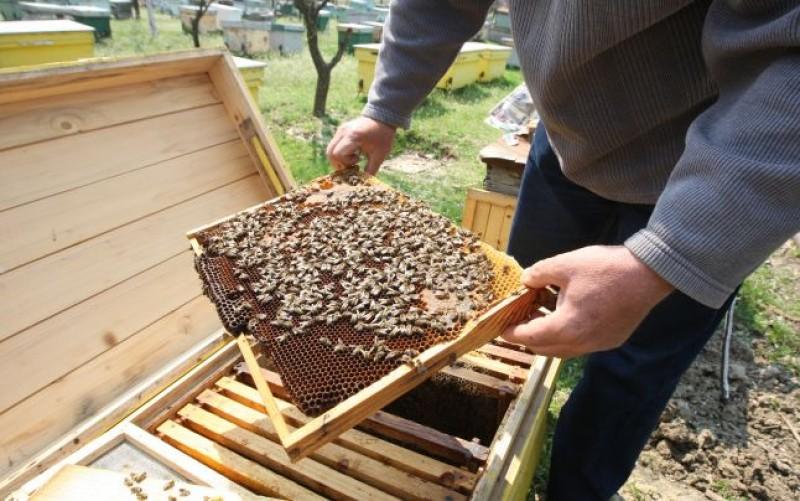 Barbat resuscitat si salvat de medici, dupa ce a fost intepat de albine!