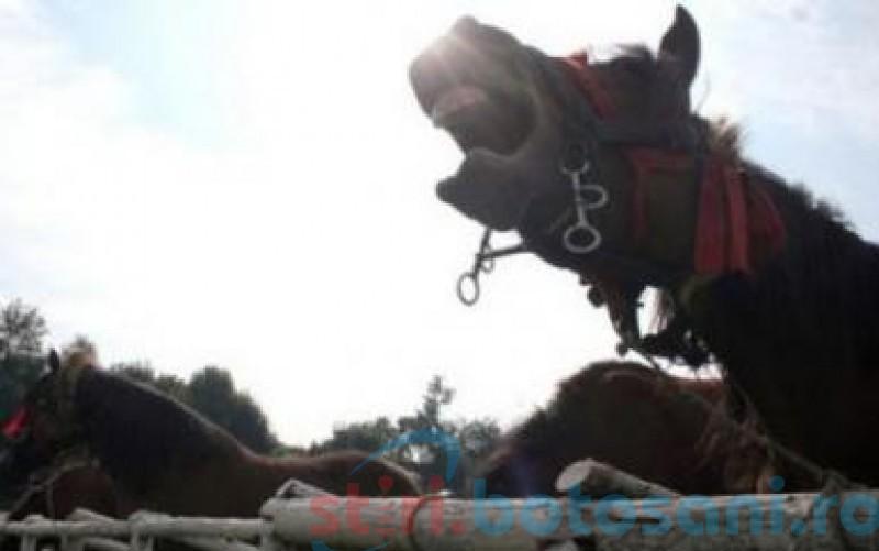 Bărbat trimis la Iaşi în stare gravă după ce a fost lovit de cal
