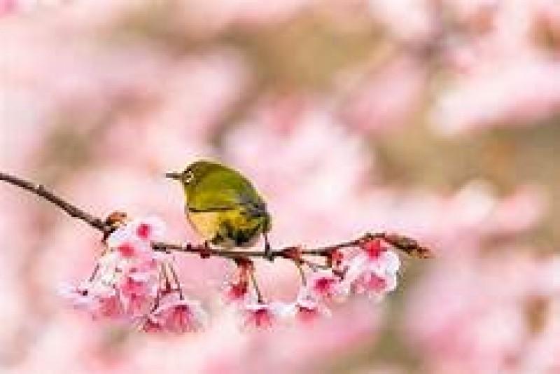 """""""Bine ai venit, Primăvară!"""", este poezia unui elev dorohoian, înscris la concursul dedicat anotimpului renașterii"""